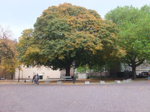An oh-so-pretty tree in Hague.
