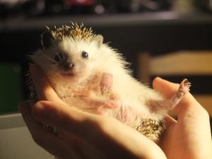 Mr. Fthoggos, the Hedgehog.