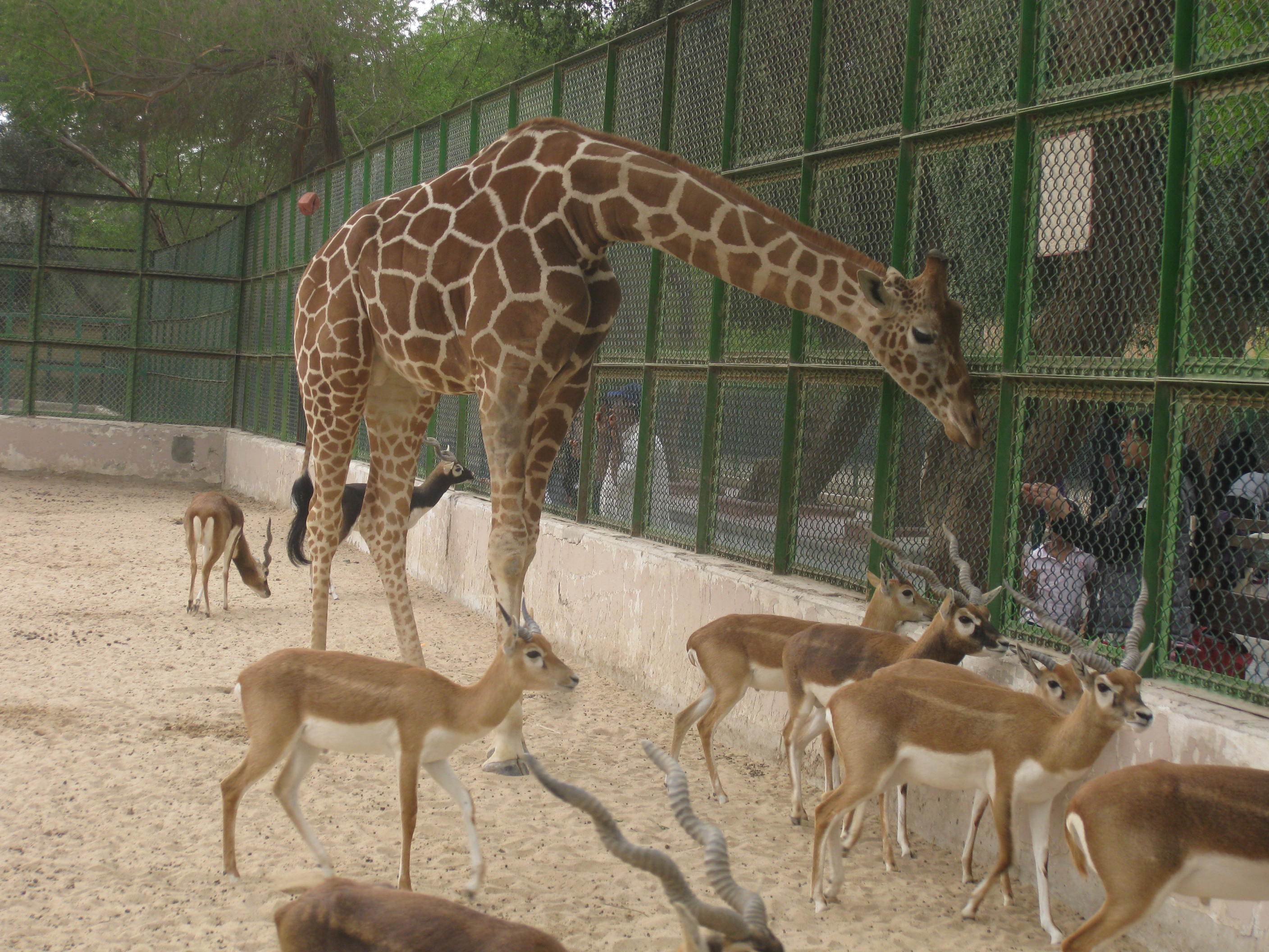 The issue with zoos and why the killing of Marius is not ...