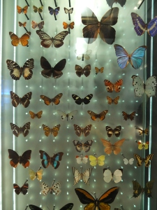 Did these butterflies have a natural death? I doubt it. But they died once and we can examine them for hundreds of years. Much better than the perpetual cycle of life and death in slavery that goes on in zoos.