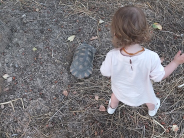 LM also got to see (and chase, and reach) a tortoise as well. She was pretty excited about it.