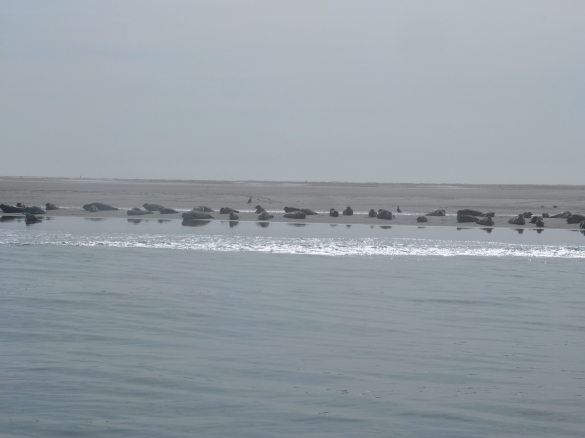 Yes, these are seals :)